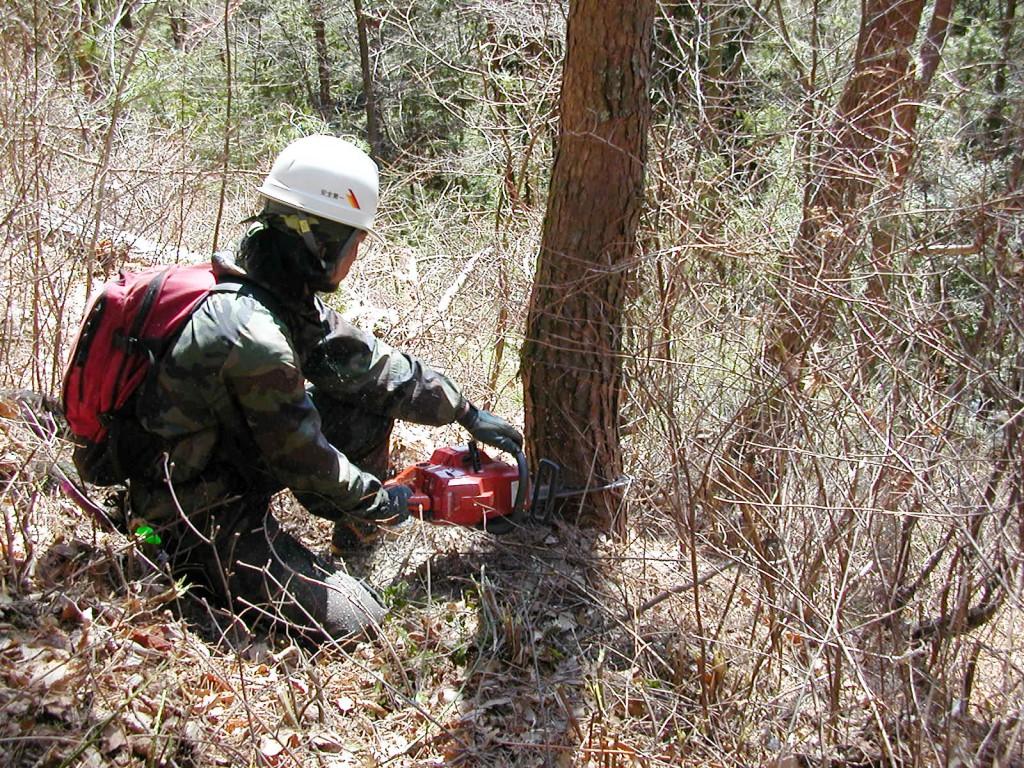 森林整備(間伐)