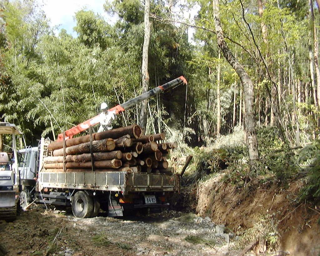 森林整備(間伐材の搬出)